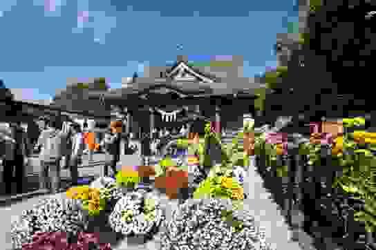 Thú vị lễ hội hoa cúc tháng 11 tại Nhật Bản