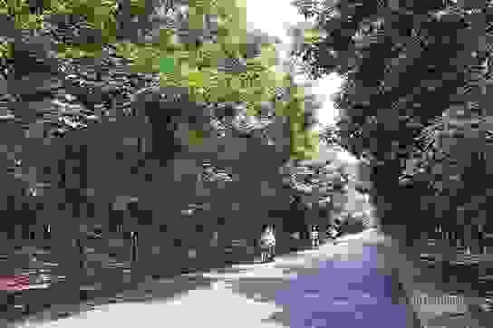Đại biểu Quốc hội tỉnh Gia Lai nói cây cao su thải khí CO2, chuyên gia lên tiếng