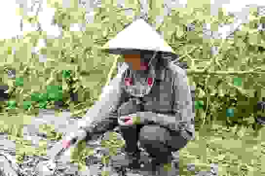 """Nông dân """"khóc hết nước mắt"""" nhìn vườn cây ăn quả thiệt hại nặng sau bão"""