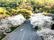 ĐH Vũ Hán quay cảnh hoa anh đào nở trong trường, thu hút 4 triệu lượt xem