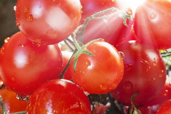 Ăn cà chua hàng ngày có thể bảo vệ chống lại ung thư da