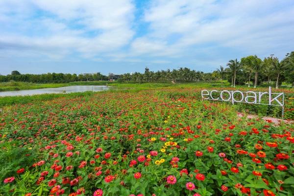 Cánh đồng hoa đẹp như cổ tích trong thành phố triệu cây xanh gần Hà Nội