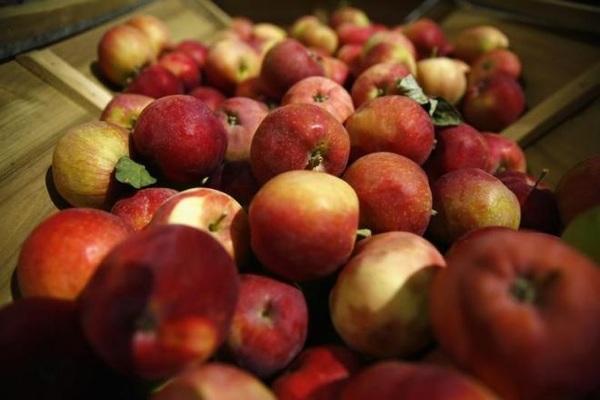 Ăn táo tốt đủ đường, ngăn ngừa cả ung thư