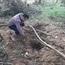 """Nghi vấn người dân nhặt được cây gỗ sưa """"tiền tỷ"""" nặng 1,6 tấn"""