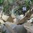 Phó Bí thư tỉnh uỷ Phú Yên chỉ đạo khẩn trương truy tìm các đối tượng phá rừng!
