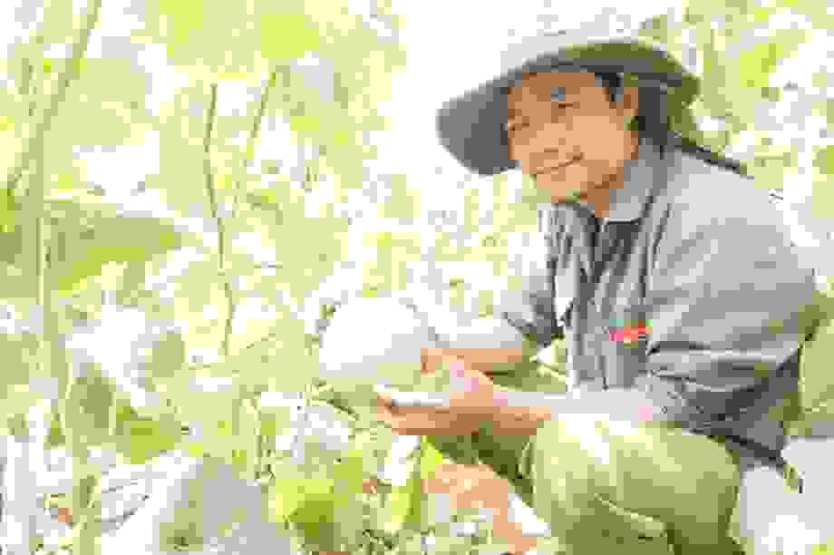 Thạc sĩ từ nước ngoài về trồng dưa lưới thu hàng trăm triệu đồng mỗi năm