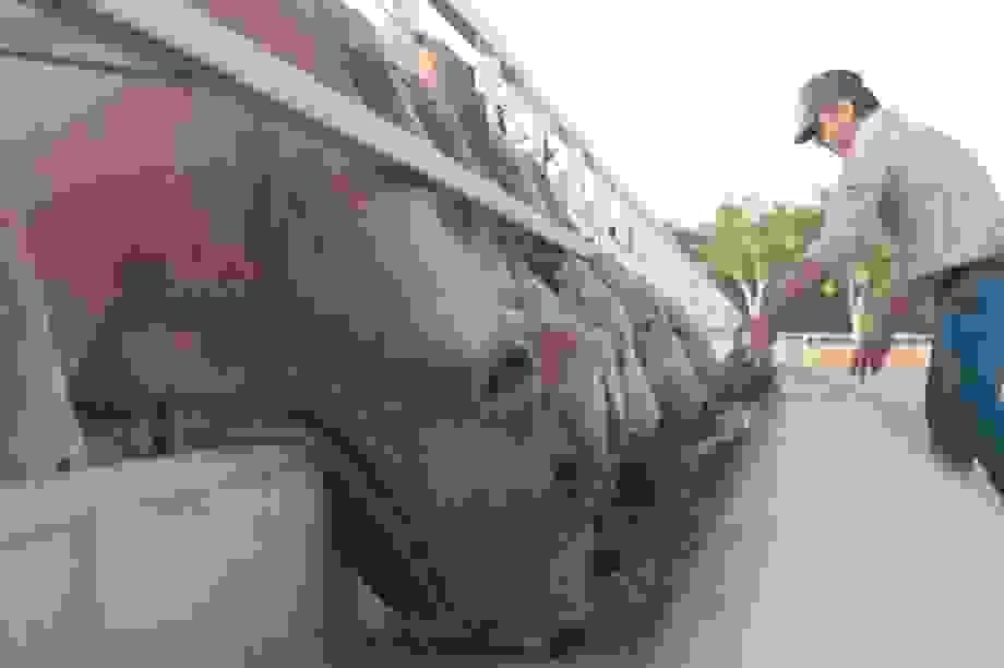 Chuyến bò đầu tiên của Hòa Phát Úc đang trên đường về Việt Nam