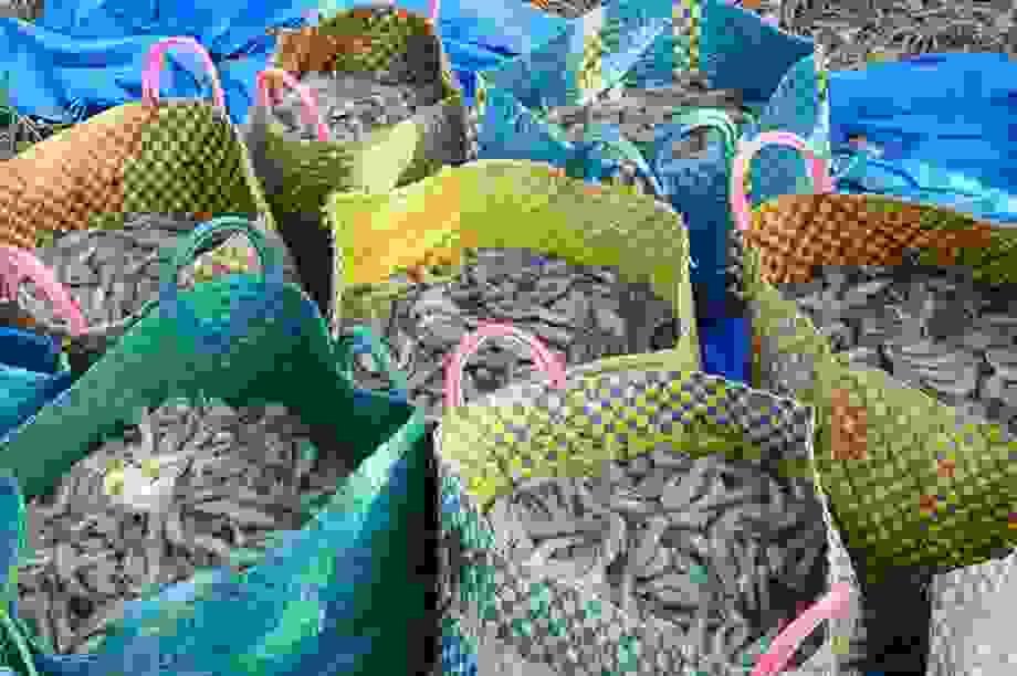 Phấn đấu năm 2020 xuất khẩu tôm đạt khoảng 3,5 tỷ USD
