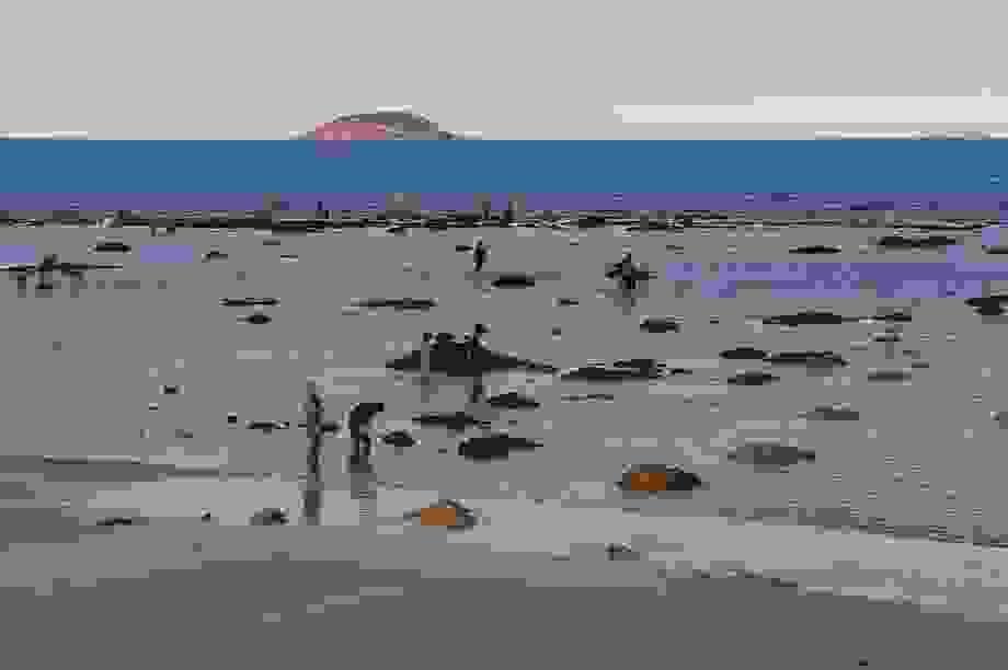 Bãi biển Nha Trang nhộn nhịp mùa nước cạn, phát lộ nhiều bãi đá