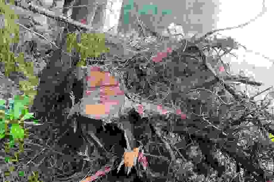 Nhiều sai phạm tại các ban quản lý rừng phòng hộ ở Nghệ An