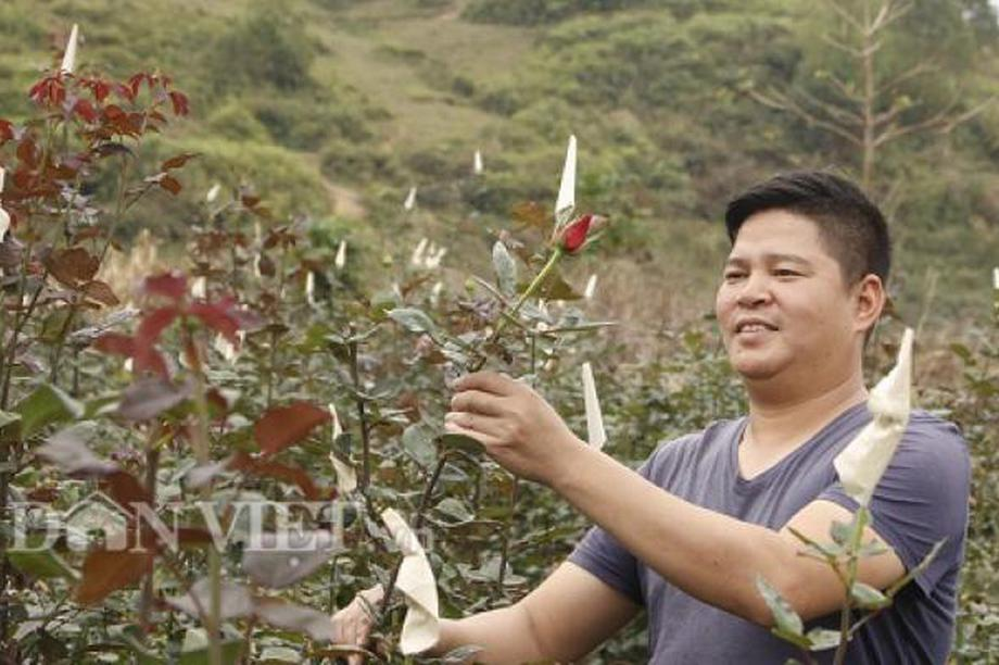 Bỏ phố lên núi trồng hoa, trai Hà Nội kiếm nửa tỷ đồng mỗi năm