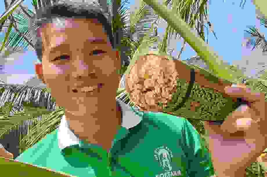 Massage hoa dừa để... lấy mật, 1 hoa chảy ra 25 lít, kiếm 250.000 đồng