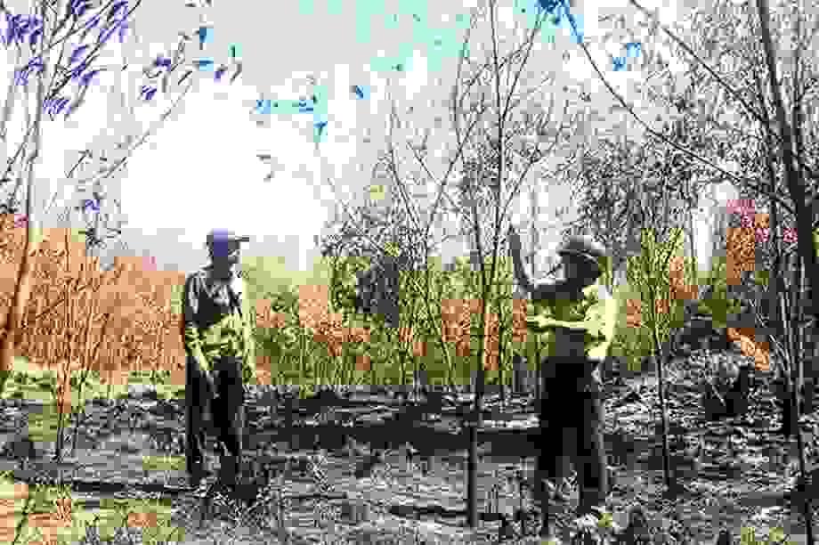 Điều tra vụ gần 100 ha rừng bất ngờ bị cháy, nghi có người đốt