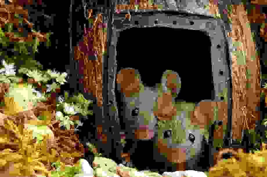 """Chiêm ngưỡng bộ ảnh gây sốt chụp """"ngôi làng của những chú chuột"""""""