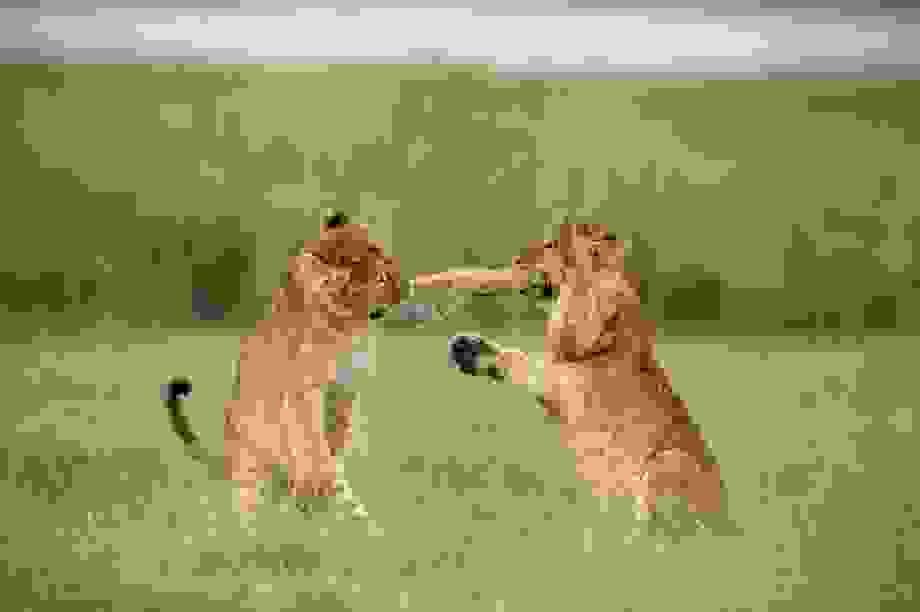 """Những khoảnh khắc hài hước """"đáng yêu"""" của động vật hoang dã"""