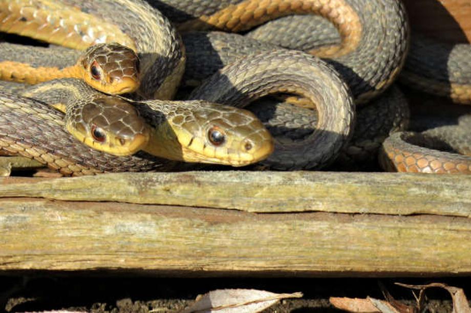 Tình bạn của loài rắn