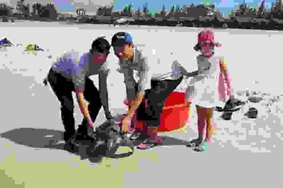 """Quảng Trị: Chú rùa biển """"khủng"""" nhiều lần đi lạc đều được cứu, thả"""