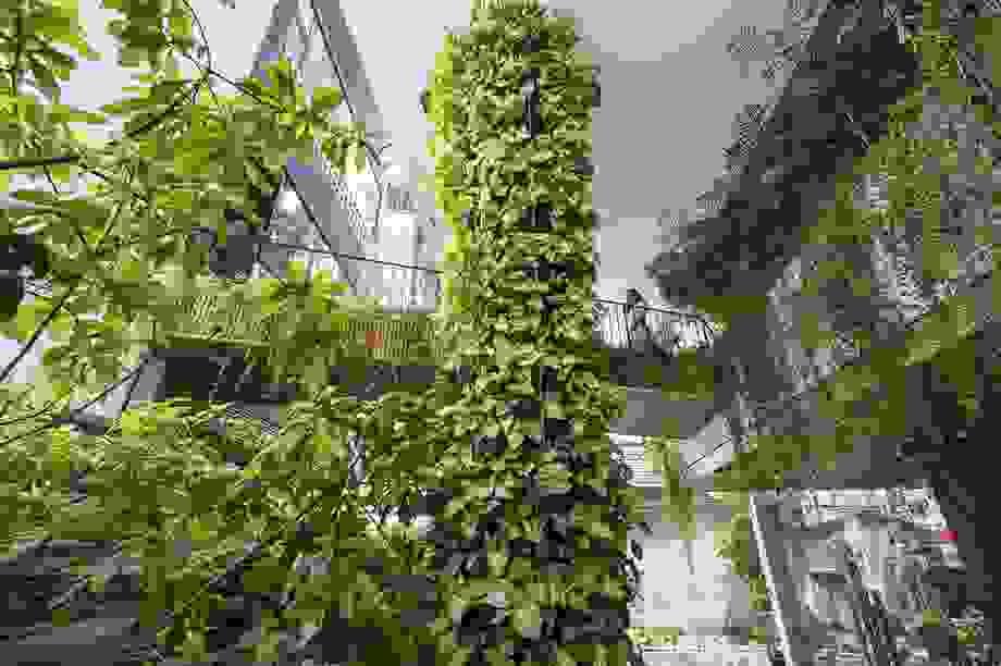 Khu vườn treo bí mật ẩn trong ngôi nhà đá ong đẹp tuyệt ở Đà Nẵng