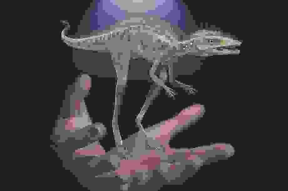 Một loài săn mồi nhỏ bé có thể là tổ tiên của khủng long khổng lồ?