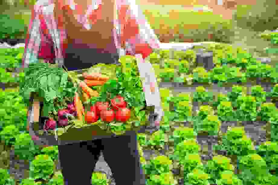 """Học cách ăn uống """"thuận theo tự nhiên"""" để sống khỏe, đẩy lùi bệnh tật"""