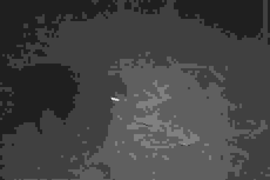Phát hiện 2 loài động vật quý hiếm thuộc Danh lục Đỏ thế giới tại Thanh Hóa