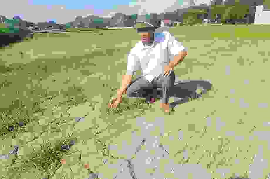 Ruộng nứt nẻ, lúa khô cháy, nông dân căng mình chống hạn