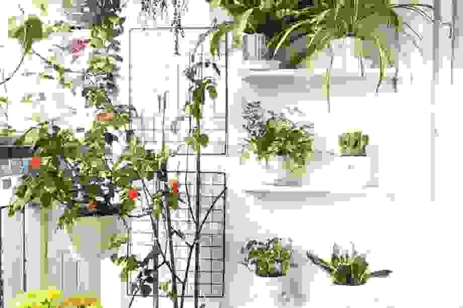 Vợ đảm Hà Nội cải tạo ban công thành khu vườn nhỏ xinh chỉ với 1 triệu đồng