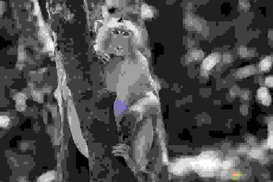 Khám phá vương quốc khỉ ở TP Hồ Chí Minh