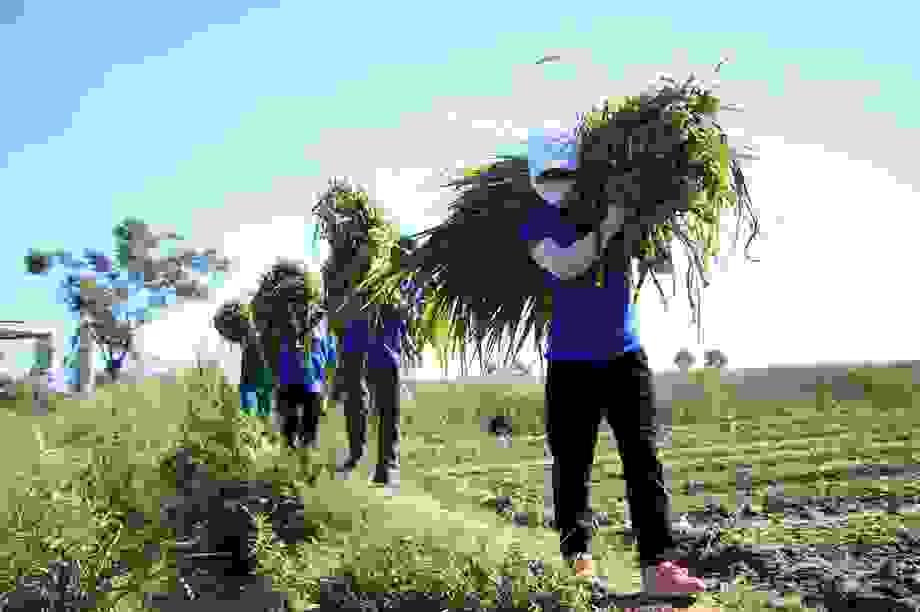 Quảng Ngãi:  Áo xanh lội ruộng tìm thức ăn cho vật nuôi khu cách ly