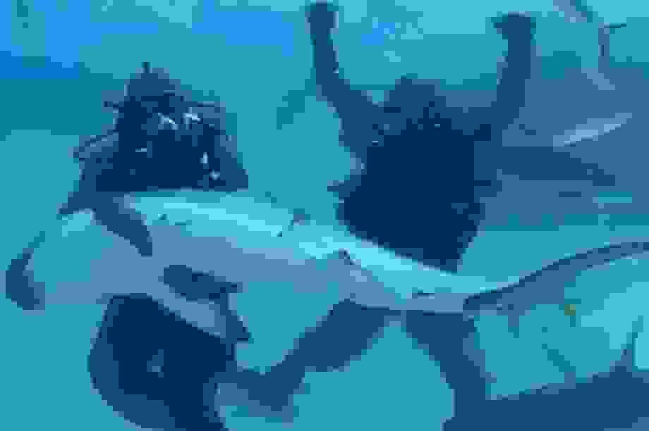 """Mike Tyson sợ hết hồn khi """"chiến đấu"""" với cá mập trắng"""