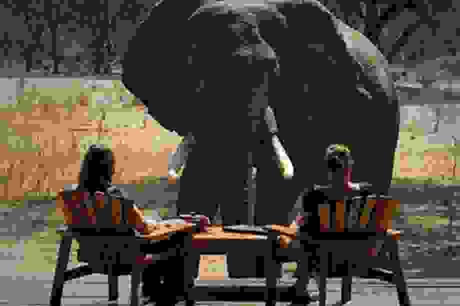 """Các safari kỳ thú tiếp cận những """"gã khổng lồ"""" hoang dã châu Phi"""