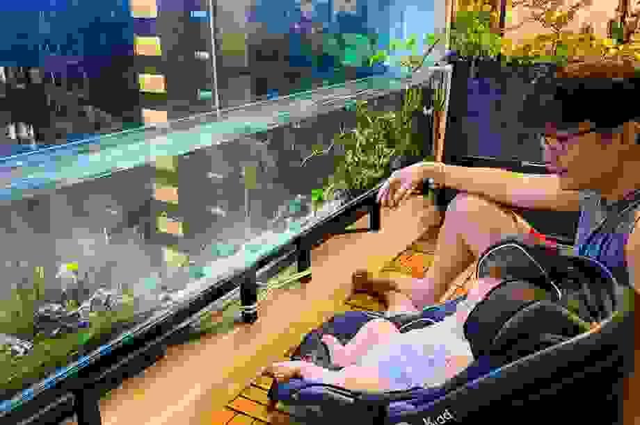 Ông bố ở Sài Gòn biến ban công thành vườn thu nhỏ với hồ cá, cây xanh