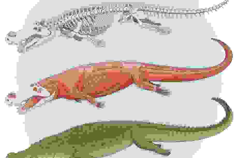 Phát hiện hóa thạch loài cá sấu cổ đại kì dị hoàn toàn mới