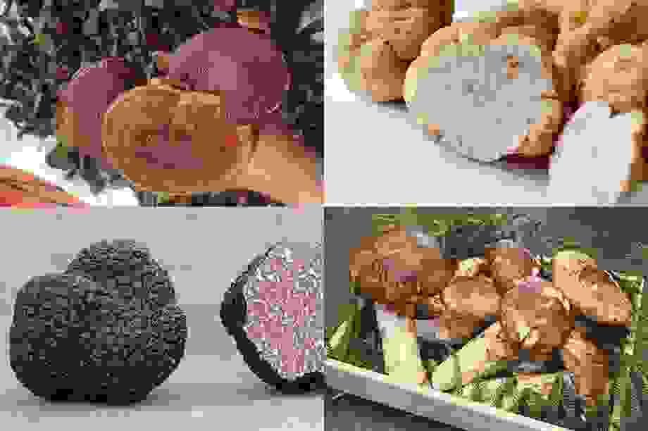 Loại nấm đắt như vàng, có gì hay khiến dân sành ăn phải ráo riết lùng mua?